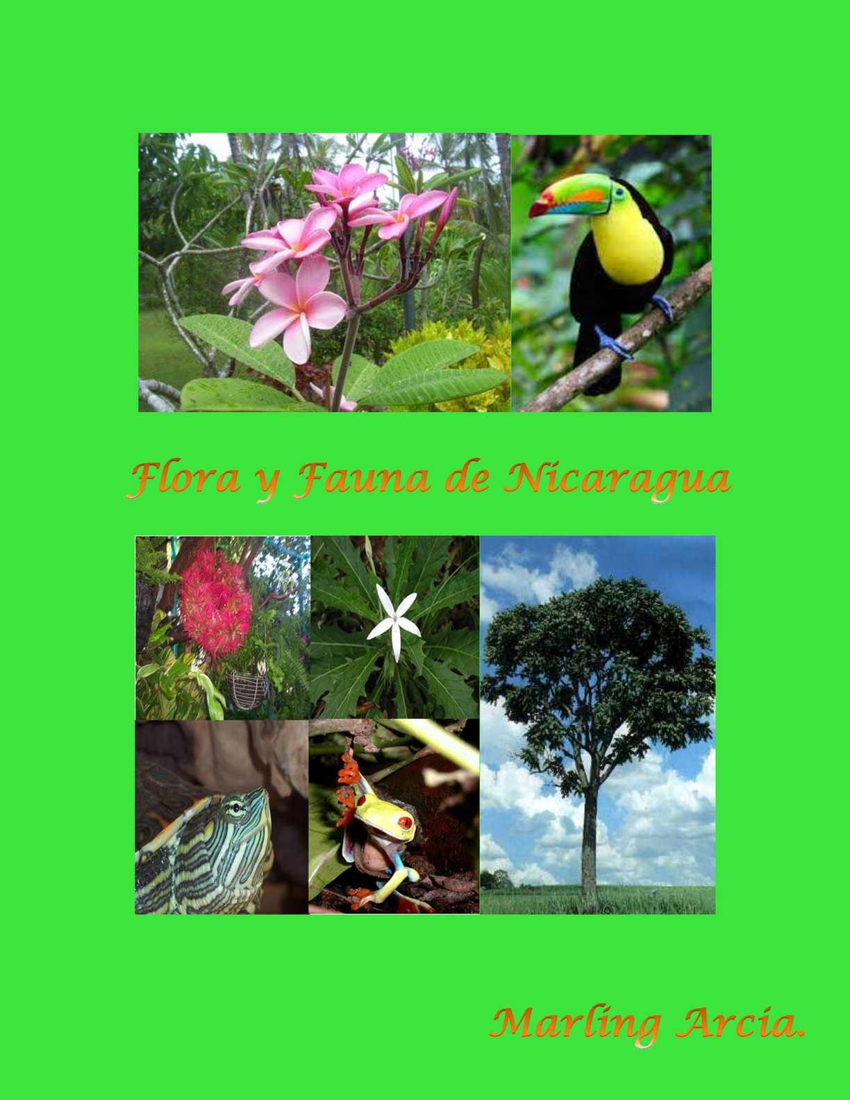 Calamo  Flora y Fauna de Nicaragua