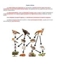Cadenas Alimenticias La Ecologa Es El Estudio De Los