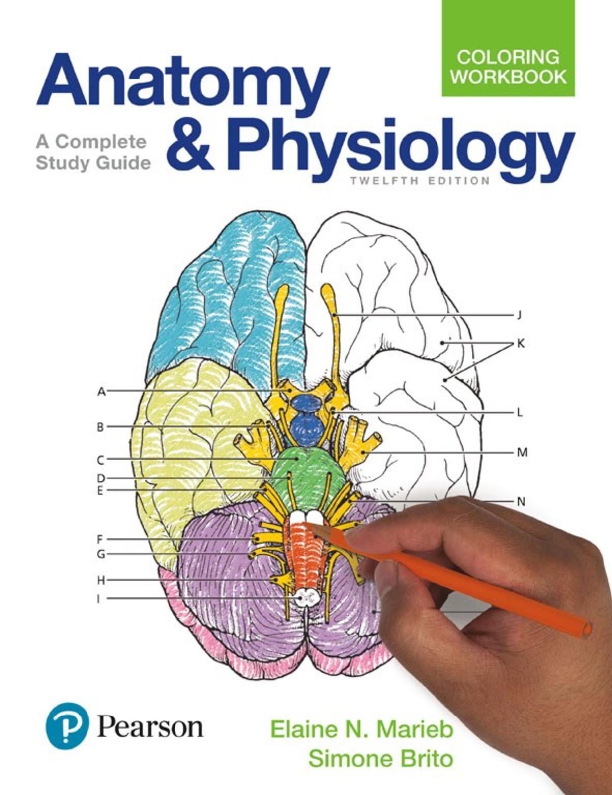 hight resolution of anatomy and physiology coloring workbook a complete study guide 12th edition 2017