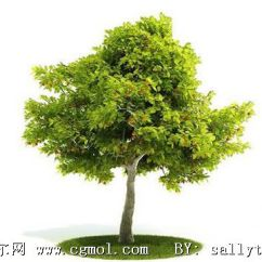 Kitchen Machine Blue Backsplash Tile 梧桐树,泡桐树3d模型,树木模型,植物模型,3d模型下载,3d模型网,maya模型免费下载,摩尔网