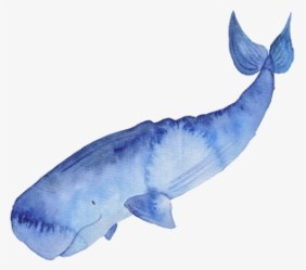 Blue Whale PNG Images Free Transparent Blue Whale Download KindPNG