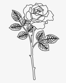 Rose Drawing Png : drawing, Drawing, Images,, Transparent, Download, KindPNG