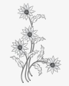 Flowers Drawing Png : flowers, drawing, Flower, Drawing, Images,, Transparent, Download, KindPNG
