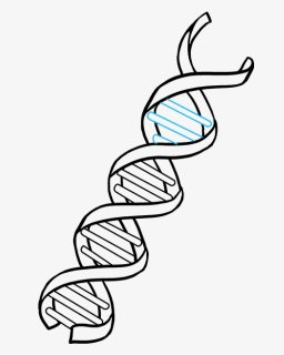 Dna Easy Drawing : drawing, Molecule,, Download, Kindpng