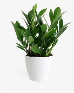Plant Top View Png : plant, Plant, Images,, Transparent, Download, KindPNG