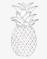 Pineapple Outline PNG Images Free Transparent Pineapple Outline Download KindPNG