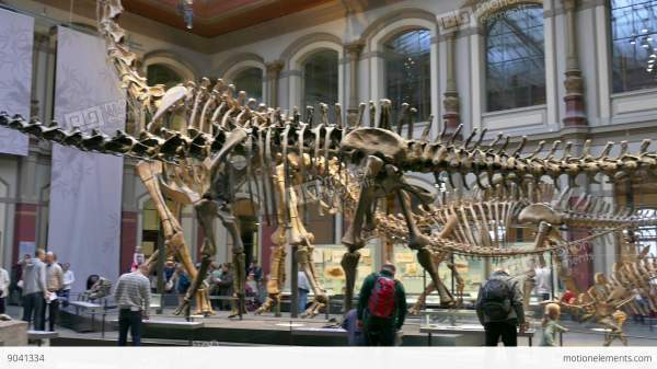 8 Berlin City Germany Europe Natural History Museum People