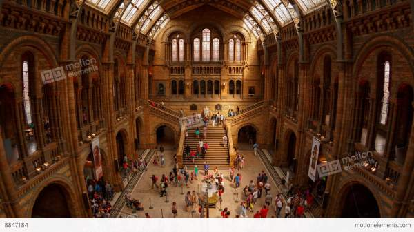 Natural History Museum Indoor Timelapse Stock Video