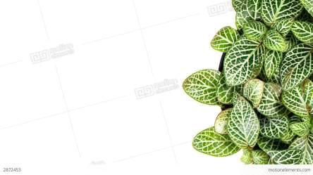 border leaves decorative animation hd