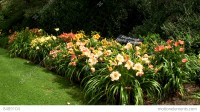 Day Lily Garden At Heritage Plantation Cape Cod Stock