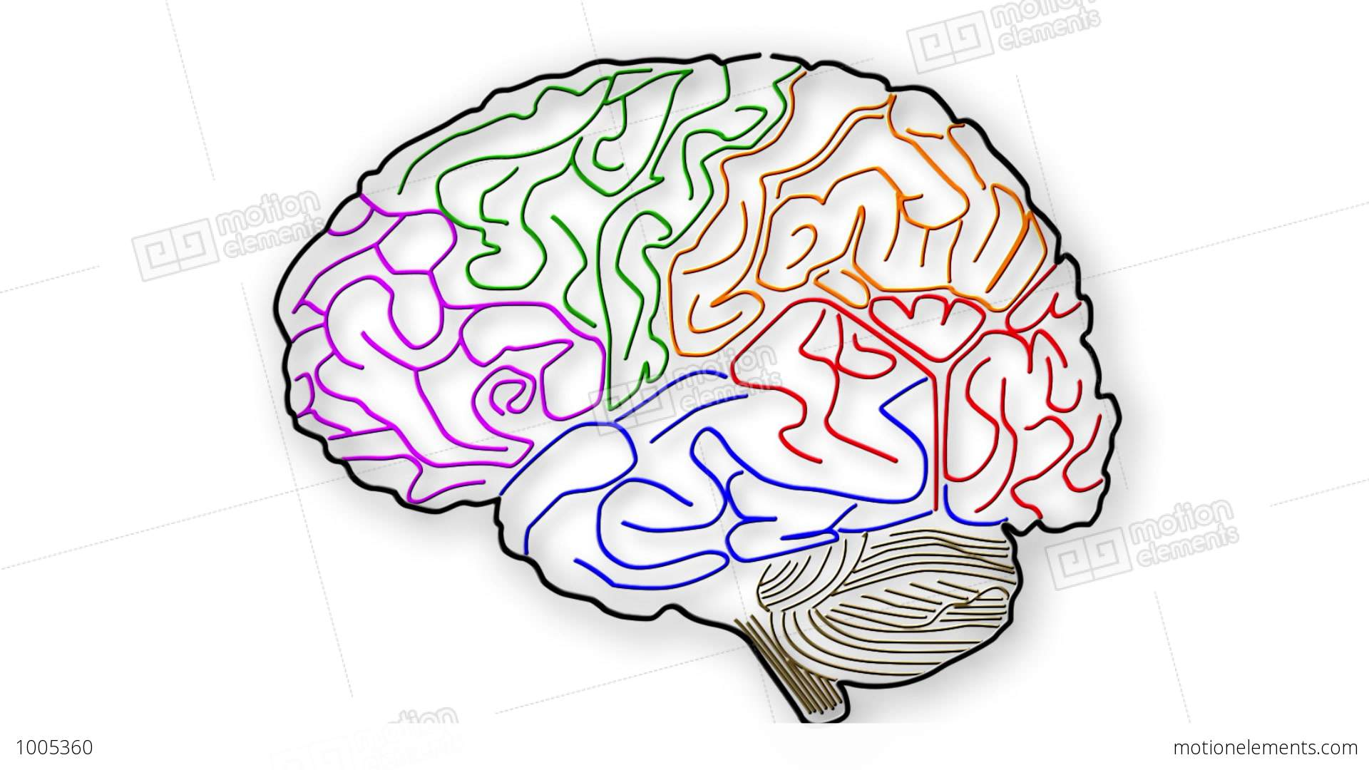 match the letters on diagram of human brain smeg double oven wiring 01 stock animation 1005360