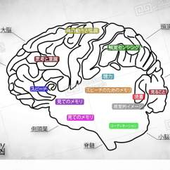 Match The Letters On Diagram Of Human Brain 2003 Toyota Matrix Parts 02 Japanese Stock Animation 1005361