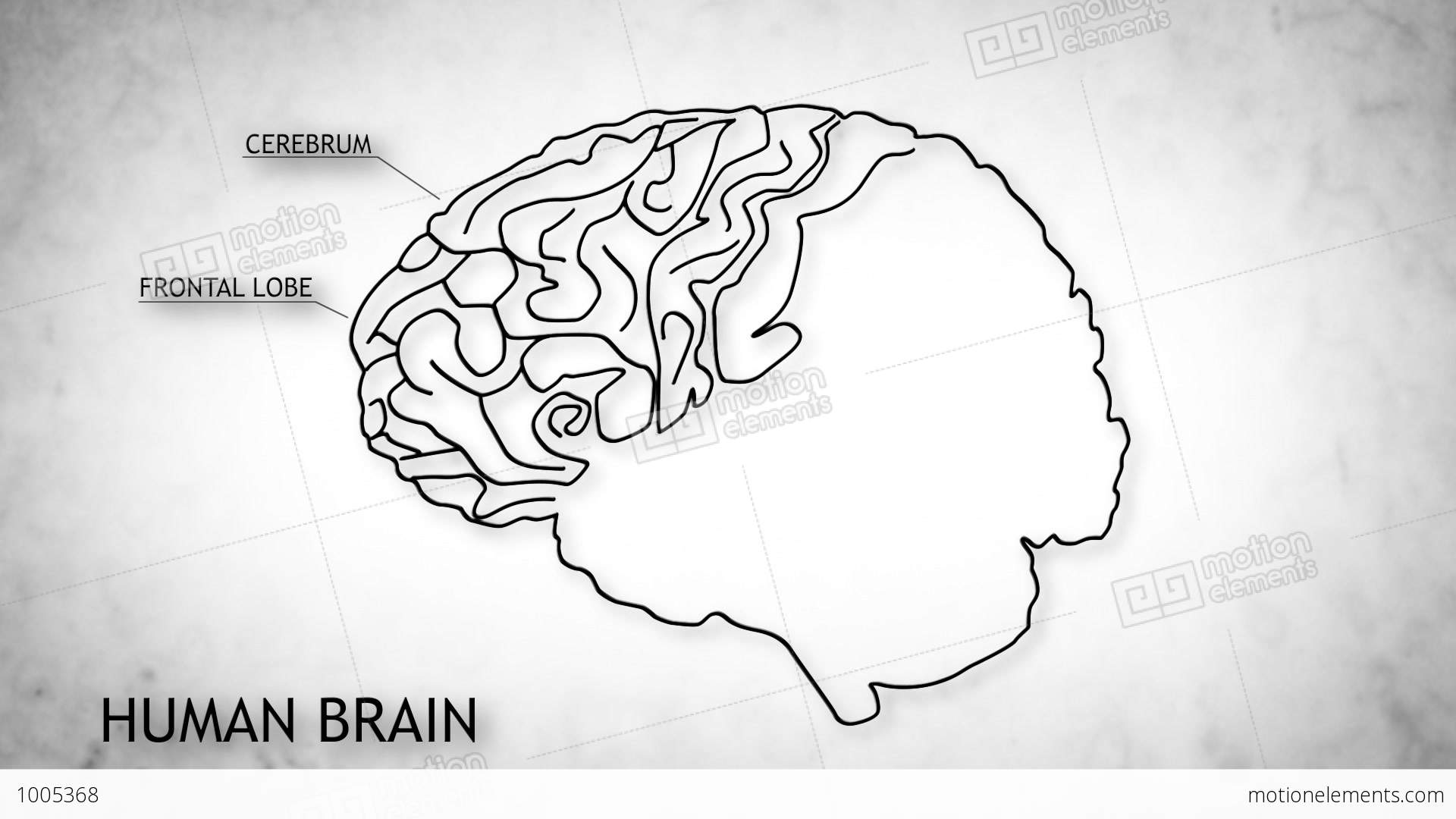 match the letters on diagram of human brain baldor 5hp single phase motor wiring 06 stock animation 1005368