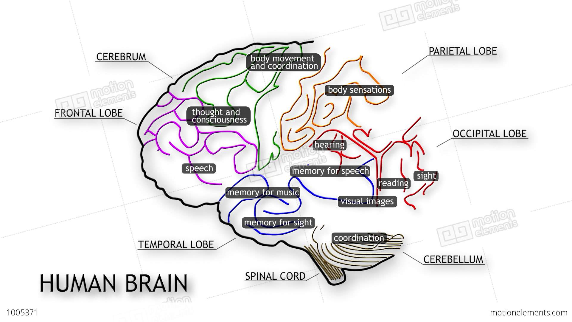 match the letters on diagram of human brain contactor wiring with timer 09 stock animation 1005371