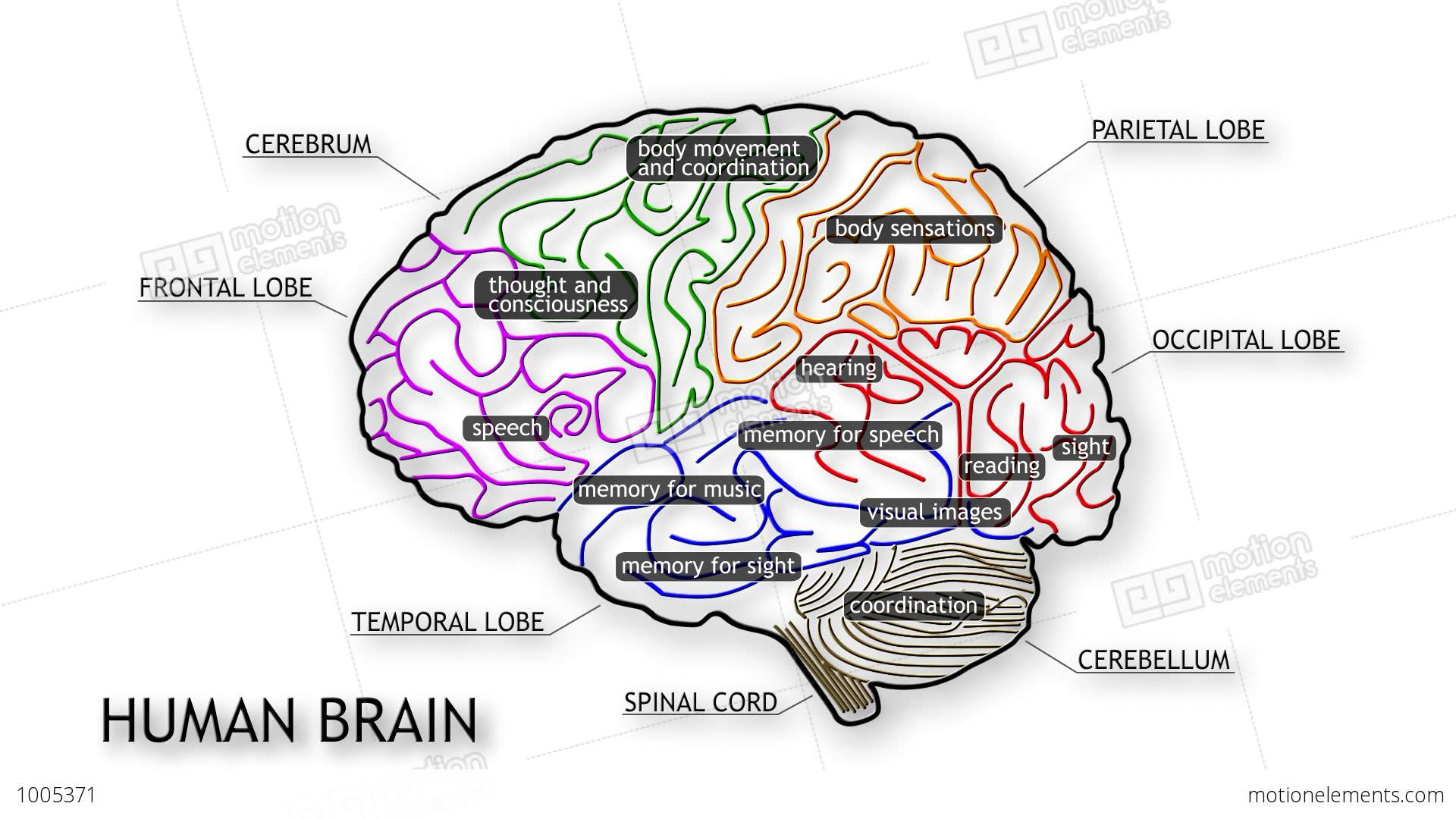 match the letters on diagram of human brain ae86 ecu wiring 09 stock animation 1005371