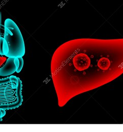 human male organs x ray set liver infection concept idea stock [ 1920 x 1080 Pixel ]