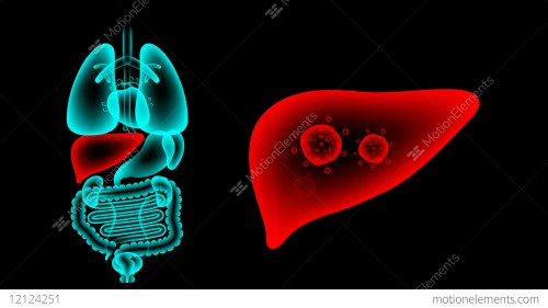 small resolution of human male organs x ray set liver infection concept idea stock