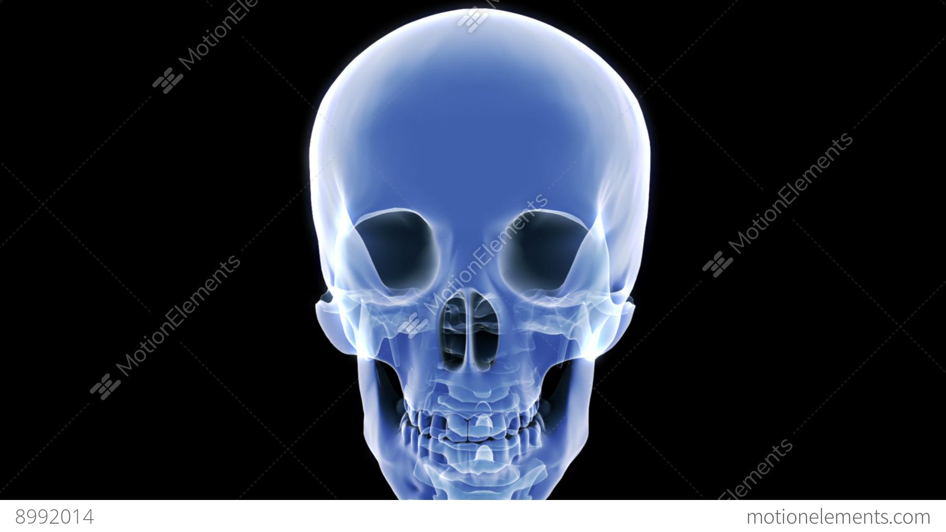 X Ray Skull Stock Video Footage