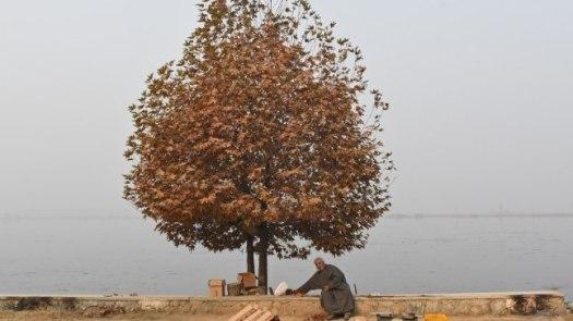 Pähklipuu (pilt on illustratiivne)