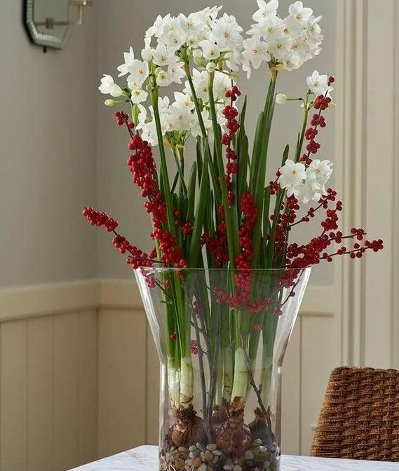 冬季在家如何養殖水仙花?掌握3種培育技巧,春節不愁沒花賞