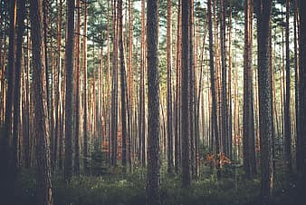 One candle can wipe out darkness; Royalty Free Trees Photos Pikist