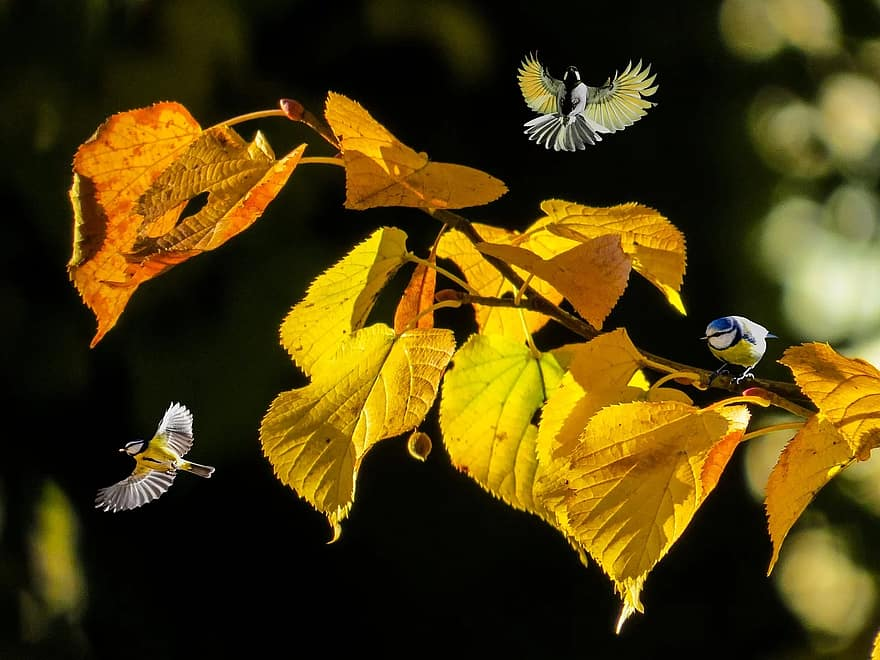 23% of all australian reptile species. Nature Autumn Forest Animals Birds Of Titmouse Flying Leaves Fall Leaves Mood Editing Pikist
