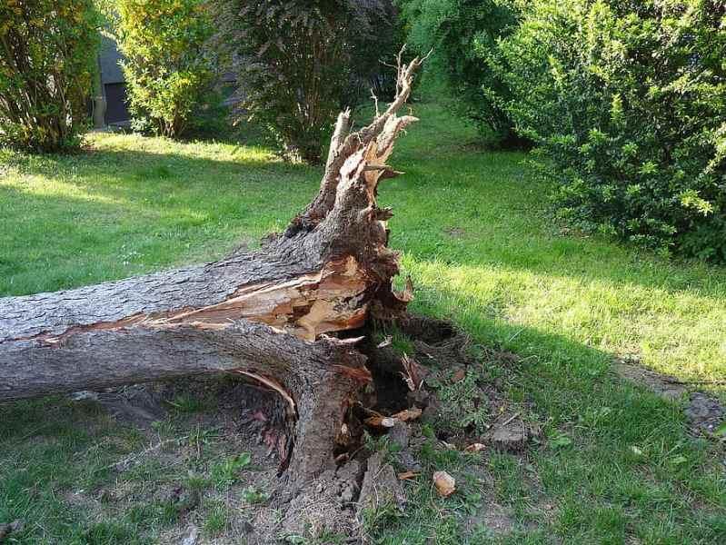 overturned, broken, storm, storm damage, tree, uprooted, twisted, forward, destroyed, canceled