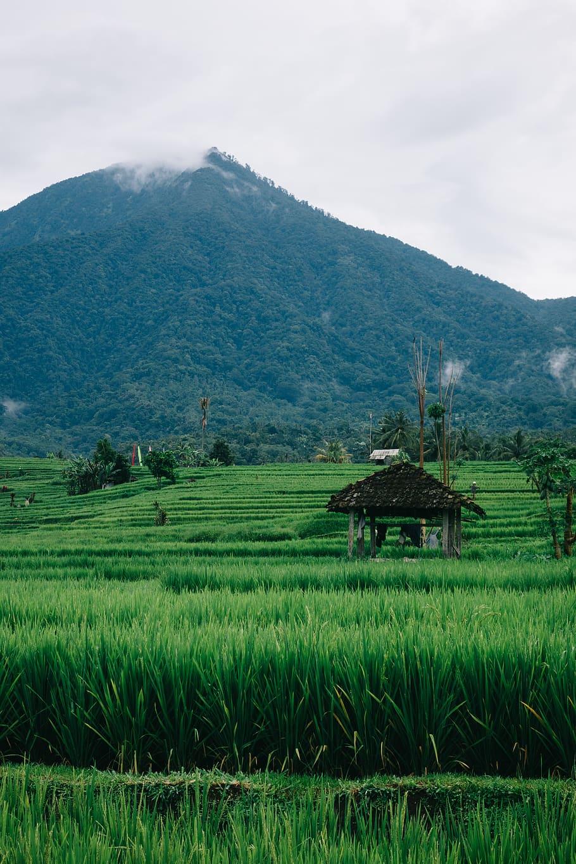 Pemandangan Sawah Hd : pemandangan, sawah, Gambar, Pemandangan, Pegunungan, Sawah, Keren
