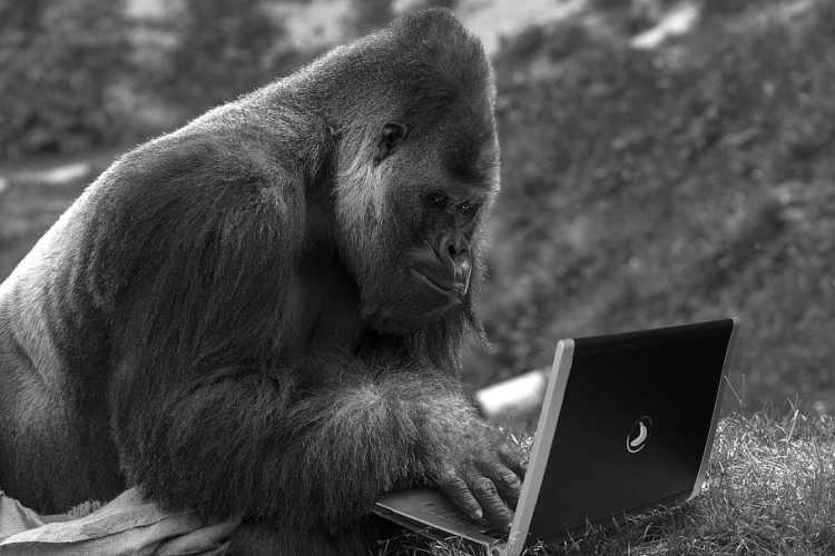 monkey, laptop, computer, technology, internet, primate, mammal ...