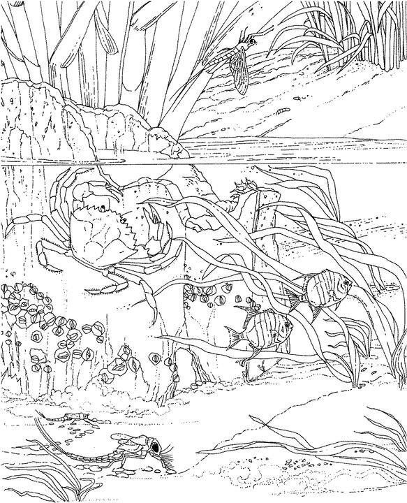 Coloring Pages Mammal Ocean Animals Ideas About On Tree
