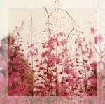 naturo fleur 005
