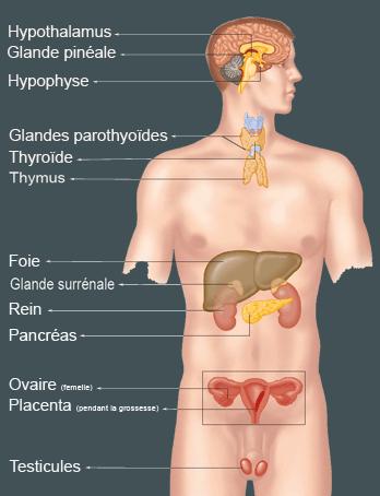 Naturopathie et glande thyroide - Nana Turopathe