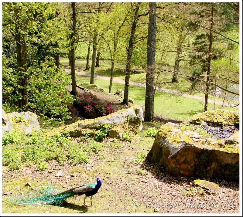 le paon bleu passion nature 78