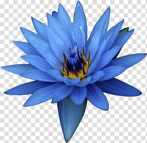 mystical nature deco blue