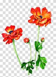 Vector Flower transparent background PNG cliparts free download HiClipart