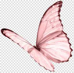 pink butterfly transparent background PNG clipart HiClipart
