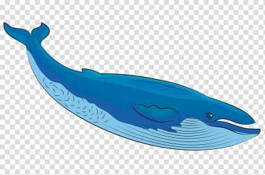 Cetacea whale blue whale dolphin animal figure Bottlenose Dolphin Sperm Whale Fin Humpback Whale transparent background PNG clipart HiClipart