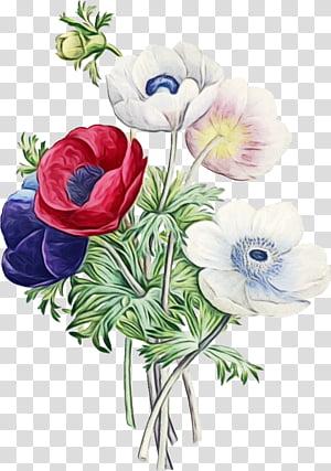 Anemone Flower Drawing : anemone, flower, drawing, Bouquet, Flowers, Drawing,, Watercolor,, Paint,, Floral, Design,, Anemone,, Flower, Bouquet,, Television, Transparent, Background, Clipart, HiClipart