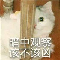 张雨绮和猛男幽会喜迎第四春?曾为爱痴狂却被戴绿帽