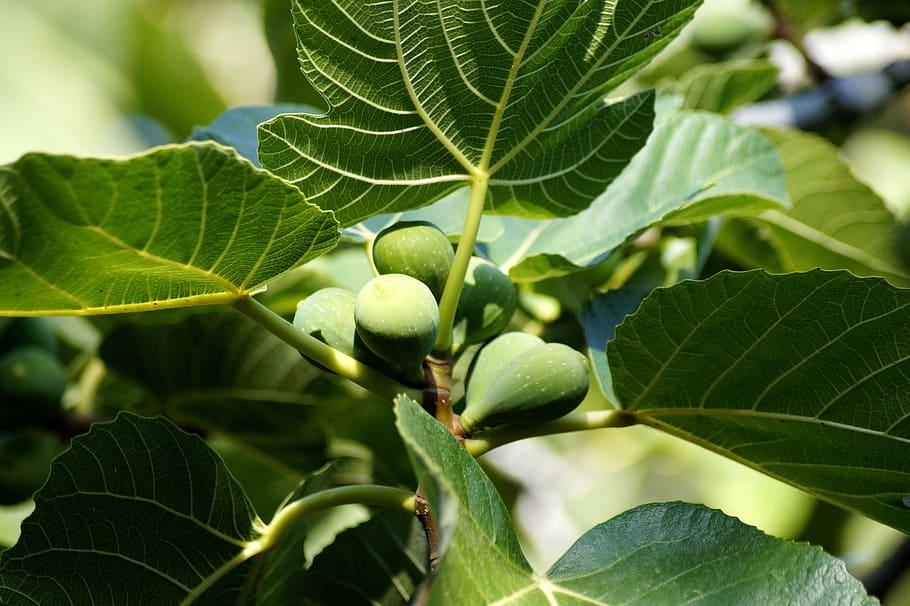 변화 없는 신앙은 열매 없이 잎만 무성한 무화과 나무와 같다