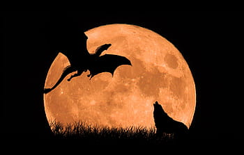Royalty free moon wolf photos free download Pxfuel