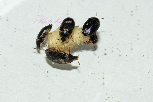 床虱咬人后癥狀圖片_螨蟲咬過后的疙瘩照片 - 隨意貼