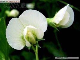 花被_360百科
