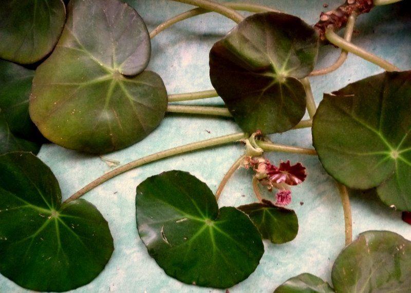La Plante Verte De Mm Tods2tods