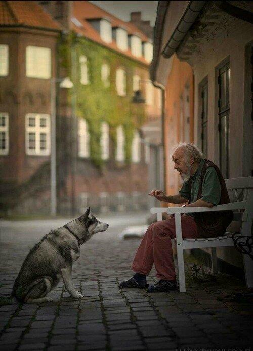 Le Vieil Homme Et Le Chien : vieil, homme, chien, Vieil, Homme, Chien, Cottage, Gwladys