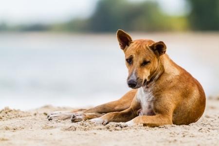 hond diarree probioica