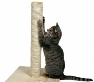 chat griffant arbre à chat