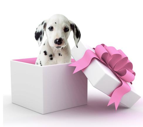 Comment bien choisir un chien ? - direct-vetdirect-vet
