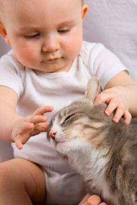 Cohabitation bébé et chat