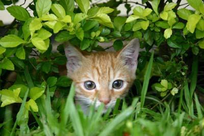 Chat et plantes toxiques